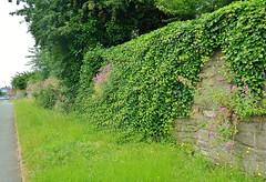 18149 (benbobjr) Tags: uk greatbritain england english abandoned rust ruins unitedkingdom britain medieval citywalls gb british herefordshire hereford remains westmidlands midlands greyfriars victoriastreet a49 townwalls redsandstone castlewalls bathstreet westmercia newmarketstreet blueschoolstreet