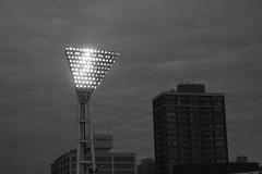Flutlicht (Konsti.) Tags: city people game japan night tokyo emotion baseball nacht stadium player stadt tigers yokohama fans supporters hanshin flutlicht