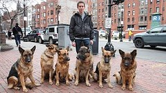 Dog Whisperer: Trainer Walks Pack Of Dogs Without A Leash (Optimus Break) Tags: dogs walks pack leash without trainer whisperer