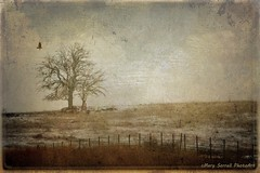 Kansas in March (Passion4Nature) Tags: snow field fence windy textures kansas artmix moonseclipse magicuniverse magicunicornverybest vermeerpearls artmixhighlights