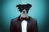 Dressy Dog Part Deux (shutteredmomentsphotography) Tags: hund fliege schick haustier anzug porträt mischling hemd freund vornehm rasse menschlich witzig weise alt humor gentleman hipster krawatte erziehung hundeschule partner tier brav guterzogen germany