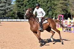 DSC_0845 (2) (ploufjf_64) Tags: paus show jumping chevaux pau 2016