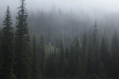 East Inlet (Tony Pulokas) Tags: eastinlet rockymountainnationalpark colorado tree tilt blur bokeh grandlake forest pine lodgepolepine fog