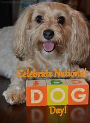 Celebrate National Dog Day! (yourdesignerdog) Tags: ifttt wordpress all posts holidays alphabet blocks blog building celebrate dog smiling love national day time tongue out