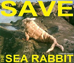 SAVE THE SEA RABBIT, official poster, design by Dr. Takeshi Yamada. Coney Island Sea Rabbit Center.   2013-01 FINAL (searabbits23) Tags: searabbit seara takeshiyamada  taxidermy roguetaxidermy mart strange cryptozoology uma ufo esp curiosities oddities globalwarming climategate dragon mermaid unicorn art artist alchemy entertainer performer famous sexy playboy bikini fashion vogue goth gothic vampire steampunk barrackobama billclinton billgates sideshow freakshow star king pop god angel celebrity genius amc immortalized tv immortalizer japanese asian mardigras tophat google yahoo bing aol cnn coneyisland brooklyn newyork leonardodavinci damienhirst jeffkoons takashimurakami vangogh pablopicasso salvadordali waltdisney donaldtrump hillaryclinton endangeredspecies save