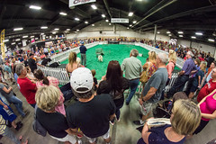 Crowds gather for a border collie show, Kentucky State Fair (sniggie) Tags: dog bordercollie kentuckystatefair kentucky louisville crowd show showring