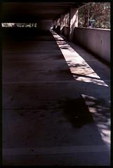Parking at work. Happy World Photography Day! (FreezerOfPhotons) Tags: olympus35sp konica160procolorprintfilm konica160pro unicolorc41
