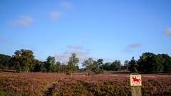 Wege durch die Heide (iltis-aura) Tags: fischbekerheide hamburgssden natur nikond7000 mksphoto sigma1750mm