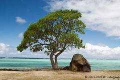 Huahin -Polynsie (jose.escudero32) Tags: polynsie huahine lessouslevent plage mer iles rve