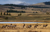 Autumn in Yellowstone (Happy Photographer) Tags: fall winter elk herd bull yellowstone national park wildlife rut autumn lake water snow amyhudechek nature