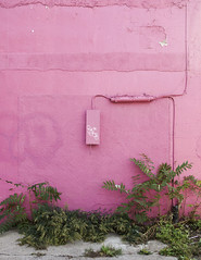 Pink (back.packing) Tags: puntacana dominicanrepublic pink architecture wall modern nature plants pastel canon5dmarkii 2470mm canon