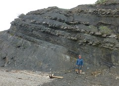 (ArgyleMJH) Tags: geology carboniferous coal sandstone mudstone cycles jogginsformation novascotia bayoffundy