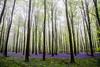 Bluebell Woods (GarethThomasJones) Tags: trees green bluebells canon flickr may july dslr arundel canonefs1785mmf456isusm canon1785mm katemiddleton canon60d gareththomasjones