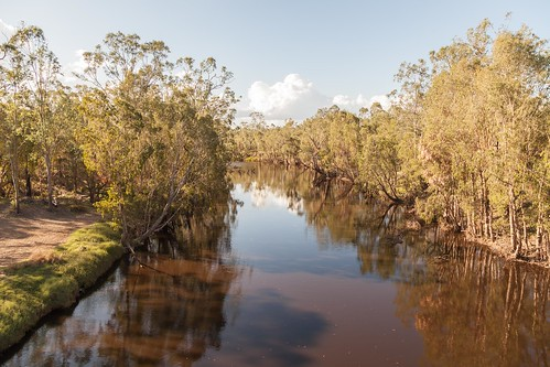 Alligator Creek