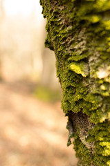 *** (peter_1891) Tags: green forest canon germany spring sigma eifel bark 30mm gerolstein 600d