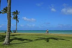 04172015_008_ (ALOHA de HAWAII) Tags: hawaii oahu kualoaregionalpark palmtreesshilphoette
