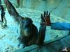 Zoo Bratislava 18.04.2015 61 (Fruehlingsstern) Tags: zoo zebra giraffe bratislava bär gibbon dinosaurier katta schimpanse nashorn dinosaurierpark roterpanda zoobratislava weisetiger weiselöwen panasonicfz200
