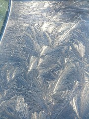 IMG_20150331_080511 (Yary) Tags: frost iceflowers fernfrost