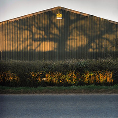 captive shadow (jellospring) Tags: shadow sunlight green barn fuji superia mat hedge 400 124g yashica jellospring