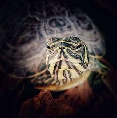 Macro (carlosbota) Tags: macro samsung sony soller fauna canon mallorca palmademallorca animales gopro photography photoshop espaa