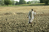Farmer Walking on Dry Soil (IFPRI) Tags: india plant man field season village farm labor farming grow dry soil health till crop produce agriculture yield arid cultivation sustainable pulses nutrition southasia manoli haryana fertile smallfarm sonipat foodsecurity agriculturaldevelopment micronutrients ifpri