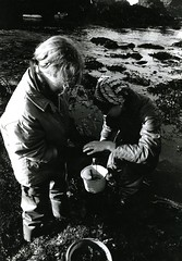 Collecting specimens (PUC Special Collections) Tags: california coastal mendocino 1960s norcal 1970s biology tidepools puc albion estuaries mendocinocounty pacificunioncollege albionfieldstation albionbiologicalfieldstation pucbiologydepartment