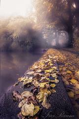 Freiraum (klausi1983) Tags: nature landscape fog sun sunlight water naturepic trees cold light autumn