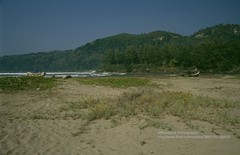 Pacitan, coast (blauepics) Tags: indonesien indonesia indonesian indonesischer landscape landschaft central zentraljava java water wasser pacitan coast kste beach strand hill hgel 1991