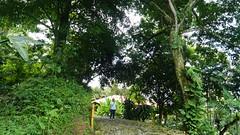 P1020017 (Mayan_princess) Tags: chiapas argovia finca resort caf coffee kaffee paraso paradise vegetacin vegetation verde green ro river spa relajacin relax forest selva orgnico autosostenible