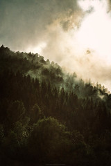 Rising mist (Manadh) Tags: norway trollstigen trollroad manadh landscape pentax k3 westernnorway sigma trees mist sun coud view