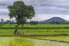 ChiangRai_5613 (JCS75) Tags: canon asia asie chiangrai thailande