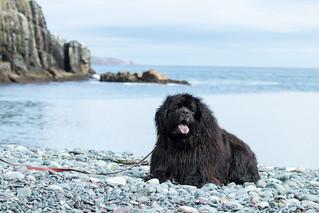 Tillie at Middle Cove Beach, Newfoundland