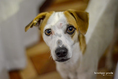 Iris (henriiqueprado) Tags: nikond3200 dog cachorro 50mm 18