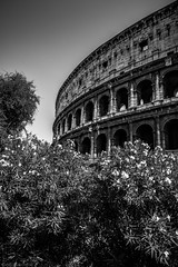 The Giant of Rome (Anthony Plancherel) Tags: architecture category decay external italy places rome travel ruin remains italian italia arena landmark icon famousplaces arches ancientbuilding roman colosseum theatre amphitheatre majestic grand imposing sky trees bushes canon canon1585mm canon550d travelphotography tourism outdoor outside architecturephotography monochrome blackandwhite bw whiteandblack