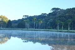 IMG_6779 (rafaeldeoliveira) Tags: curitiba paran brasil inverno winter geada freeze gelo parquebacacheri canon canoneosrebelt2i
