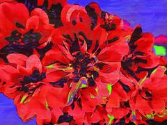An Abundance of Color (bethrosengard) Tags: bethrosengard photomanipulation digitallyenhanced photoart digitalmagic digitalart