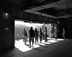 In the Fishbowl (tim.perdue) Tags: columbus zoo aquarium powell ohio animal nature fishbowl underground viewing area glass window polar bear exhibit habitat water people figures crowd light shadow black white bw monochrome street candid