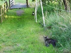 Jonas (ute_hartmann) Tags: jonas kater fremderkater