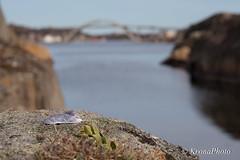 Bridge over calm water (KronaPhoto) Tags: bridge sea nature water norway shell calm bro skjærgård skjell færder