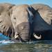 Zambezi River - Zimbabwe