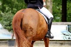 IMG_0844 (dreiwn) Tags: horse pony pferde pferd equestrian horseback reiten horseriding dressage hnger 2015 reitturnier dressur pferdekopf dressuur junioren ridingarena pferdesport doublebridle reitplatz reitverein pferdehnger kandare turnierreiten dressurprfung ldressur