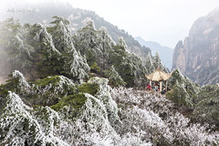 Snow & icicles covered pines - Huangshan (Pic_Joy) Tags: china cloud mist snow ice asia unescoworldheritagesite      huangshan anhui seaofclouds
