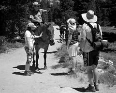 Mounted Ranger (Tom Hilton) Tags: tuolumnemeadows