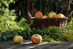 ckuchem-2055 (christine_kuchem) Tags: tisch korb deko dekoration apfelernte naturgarten herbstgarten