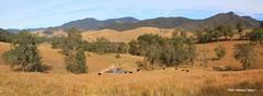 Giro Valley Landscape, Giro, off Thunderbolts Way North West of Gloucester, NSW (mypix4u2c) Tags: girovalley landscape giro thunderboltsway gloucester nsw australia msice msicepanorama panorama midnorthcoast