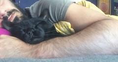 I am not the biggest fan of cats but I am the biggest fan of cuddling! via http://ift.tt/29KELz0 (dozhub) Tags: cat kitty kitten cute funny aww adorable cats
