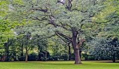 Cemetery (farmspeedracer) Tags: nature park summer july green shadow silence eternal