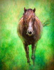 Maggie (John Ronson Photography) Tags: horse ontario canada maggie textures impression topaz kawarthalakes topaztextureeffects