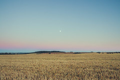Moonrise Sunset (Adam_Marshall) Tags: adam marshall summer landscape sunset nature stereocolours outdoors moon goldenhour sky field adammarshall canon eos70d sigma 1750mmf28 cambridgeshire countryside glatton moonrise crops wheat farmland soft gradient wide vast empty open warm