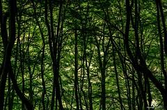 Val Canneto (Abulafia82) Tags: italy mountains color colors montagne nationalpark italia colore pentax handheld freehand colori montagna abulafia lazio k5 monti mounts 2016 parconazionale ciociaria acolori settefrati parconazionaledabruzzolazioemolise manolibera amanolibera valcanneto pnalm pentaxk5